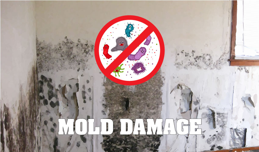 Tips for dealing with mold damage fl legal group - How to deal with mold ...