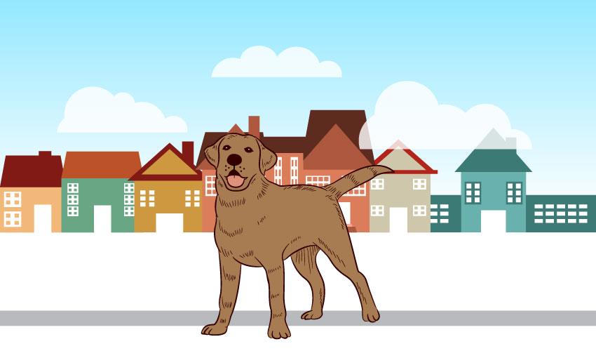 dog no pet community